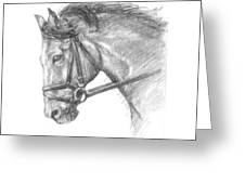 Horse's Head With Bridle Greeting Card