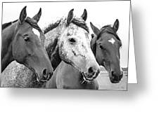Horses - Id 16217-202749-4749 Greeting Card
