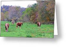 Horses In Autumn Amish Country Greeting Card