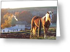 Horses In Autumn Frosty Sunrise Greeting Card