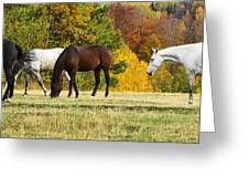 Horses In Autumn Greeting Card