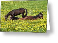Horses In Daisy Field Greeting Card