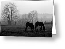 Horses In Field B And W Greeting Card