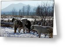 Horses In Front Of Quaggy Jo Greeting Card