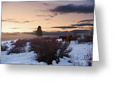 Horses In Snow At Sunset Greeting Card