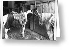 Horses In The Barn Greeting Card