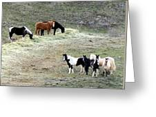Horses In The Highlands Greeting Card