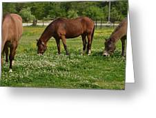 Horses In The Meadow 2 Greeting Card