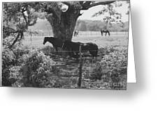 Horses In The Pasture Greeting Card
