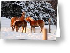 Horses In The Snow Greeting Card