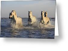 Horses In Water Greeting Card