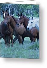 Horses Looking Greeting Card