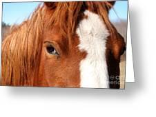 Horse's Mane Greeting Card