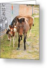 Horses On A Street Greeting Card