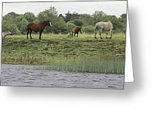 Horses On Ireland's River Shannon Greeting Card