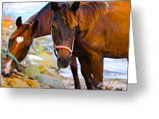 Horses On Jost  Greeting Card