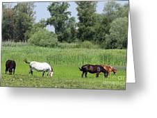 Horses On Pasture Nature Farm Scene Greeting Card