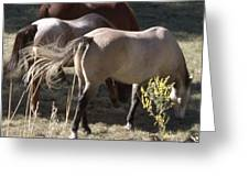 Horses Paradise Valley Greeting Card