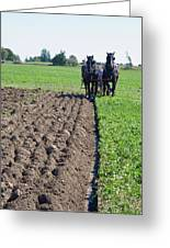 Horses Plowing Rows  Greeting Card