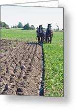 Horses Plowing Rows Two  Greeting Card