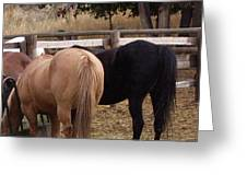 Horses Tails  Greeting Card