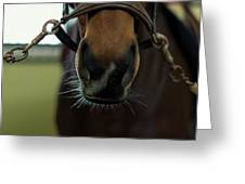 Horse Whiskers Greeting Card
