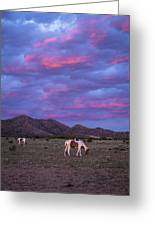 Horses With New Mexico Sunset Greeting Card