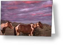 Horses With Southwest Sunset Greeting Card