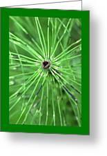 Horsetail Reed 1 Greeting Card