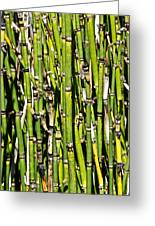 Horsetails #2 Greeting Card
