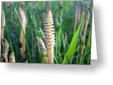 Horsetails And Dew Drops Greeting Card