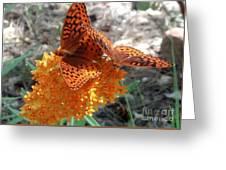 Horton Butterflies Greeting Card