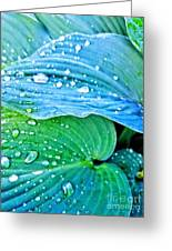 Hosta After The Rain Greeting Card