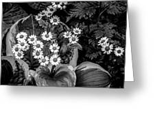 Hosta Daisies Greeting Card