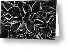 Hosta In Black And White Greeting Card