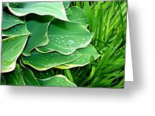 Hosta Leaves And Waterdrops Greeting Card