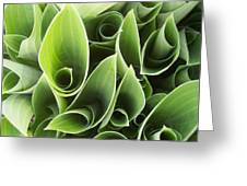 Hostas 5 Greeting Card by Anna Villarreal Garbis