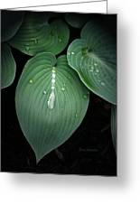 Hostas After The Rain Greeting Card