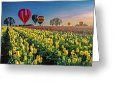 Hot Air Balloons Over Tulip Fields Greeting Card