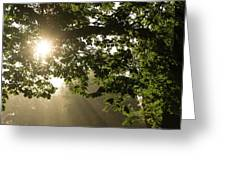 Hot Golden Mists Of Summer Greeting Card