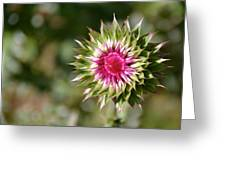 Hot Pink And Spikey Greeting Card