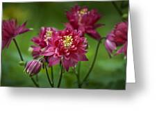 Hot Pink Columbine Greeting Card