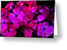 Hot Pink Florals Greeting Card