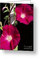 Hot Pink Glories Greeting Card