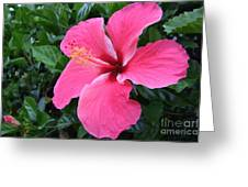 Hot Pink Hibiscus 1 Greeting Card