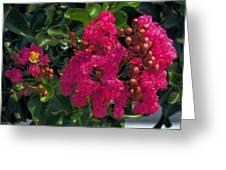 Hot Pink Jacaranda Greeting Card