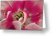 Hot Pink Tulip Greeting Card