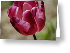 Hot Pink Tulip Squared Greeting Card