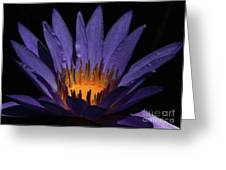 Hot Purple Water Lily Greeting Card