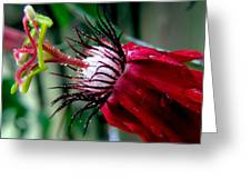 Hot Red Passion Greeting Card